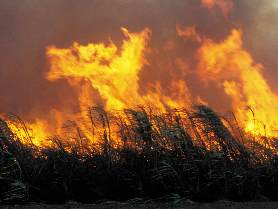 Sugar cane burn prior to harvesting at Frank Baletta's farm, Burdekin Irrigation Area, SE of Townsville. QLD.
